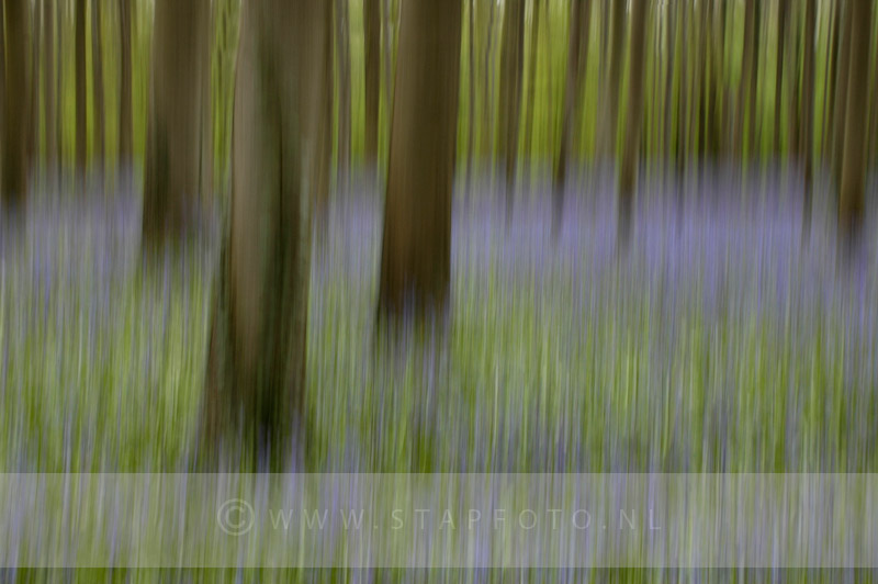 Hallerbos in beweging